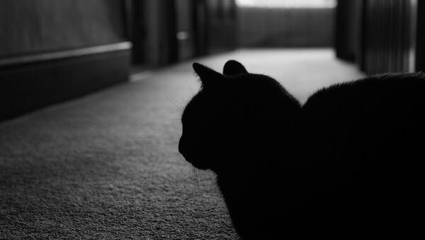 USA: kot wziął swoich właścicieli na zakładników - Sputnik Polska