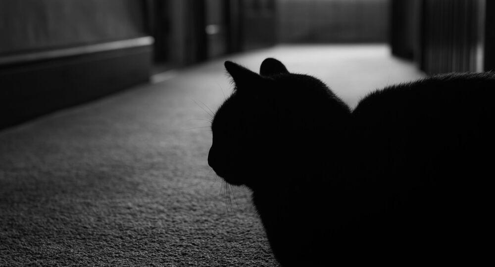 USA: kot wziął swoich właścicieli na zakładników