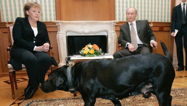 Kanclerz Niemiec Angela Merkel i prezydent Rosji Władimir Putin - Sputnik Polska