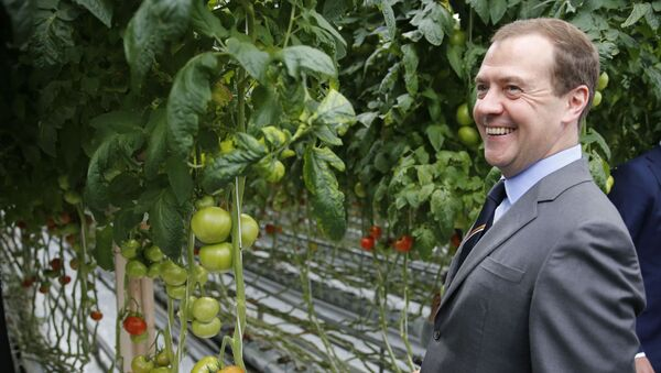 Dmitrij Miedwiediew w czasie wizytacji przedsiębiorstwa rolnego Matwiejewskojoe w obwodzie moskiewskim - Sputnik Polska