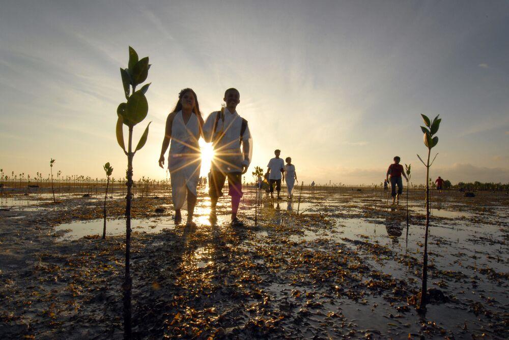 Nowożeńcy na polach mangrowych sadzonek na Filipinach.