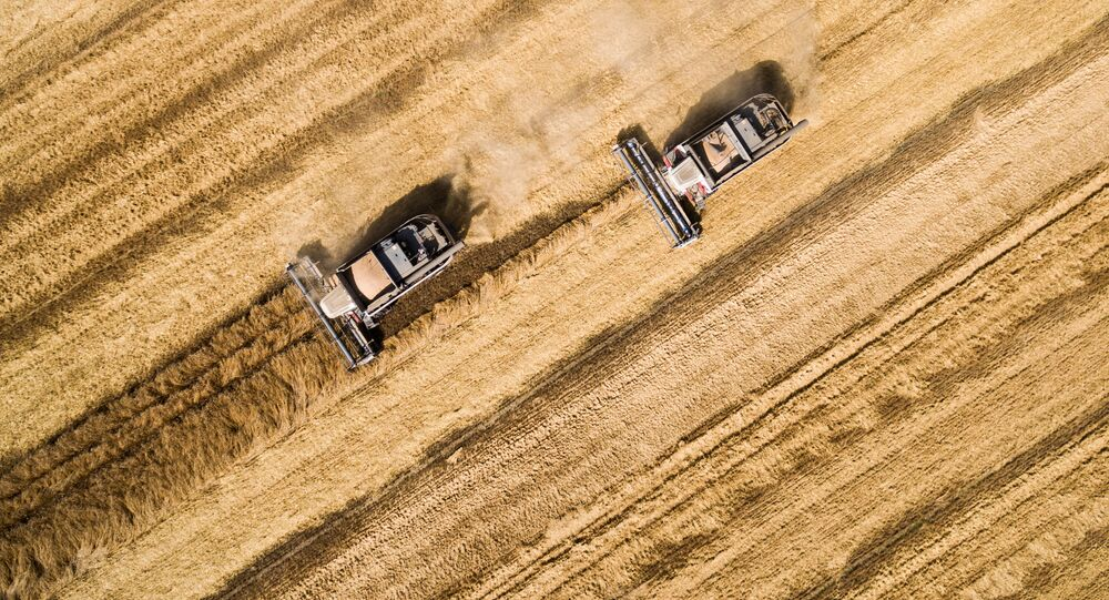 Zbiór pszenicy w Kraju Krasnodarskim