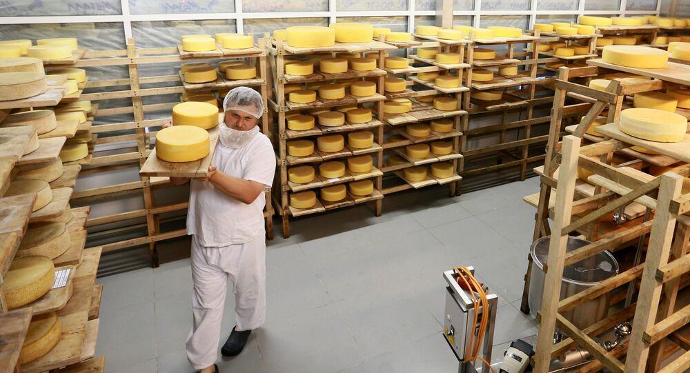 Serowar Oleg Sirota zajęty przekładaniem kręgów sera w pomieszczeniu, w którym leżakują sery. Serowarnia Rosyjski Parmezan w rejonie istrińskim obwodu moskiewskiego