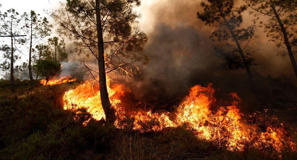 Pożar lasu w Portugalii