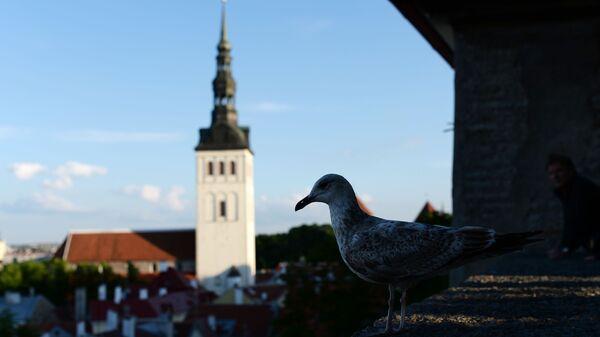Tallinn - Sputnik Polska
