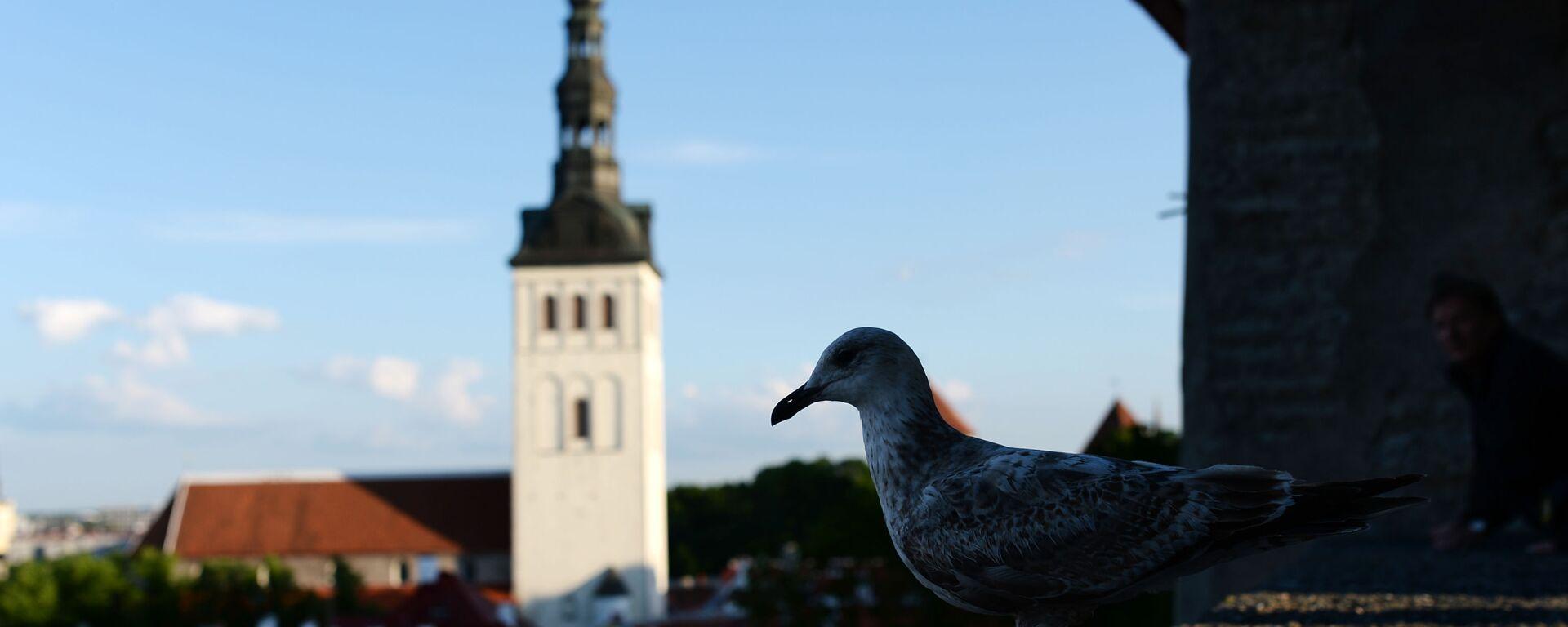 Tallinn - Sputnik Polska, 1920, 08.07.2021