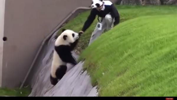 Niepokorna panda - Sputnik Polska