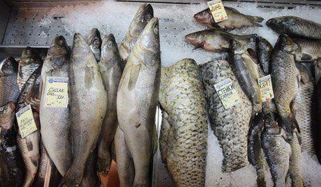 Rosja wprowadza zakaz dostaw ryb od norweskiego producenta