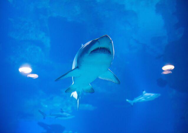 Otwarcie oceanarium we Władywostoku