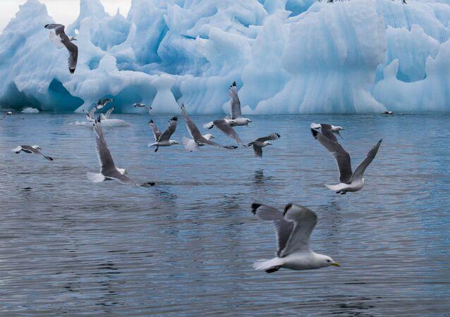 Park Narodowy Rosyjska Arktyka