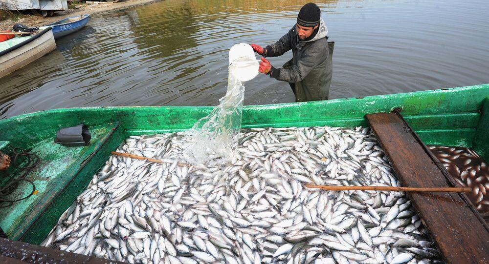 Czelabińskie gospodarstwo rybne