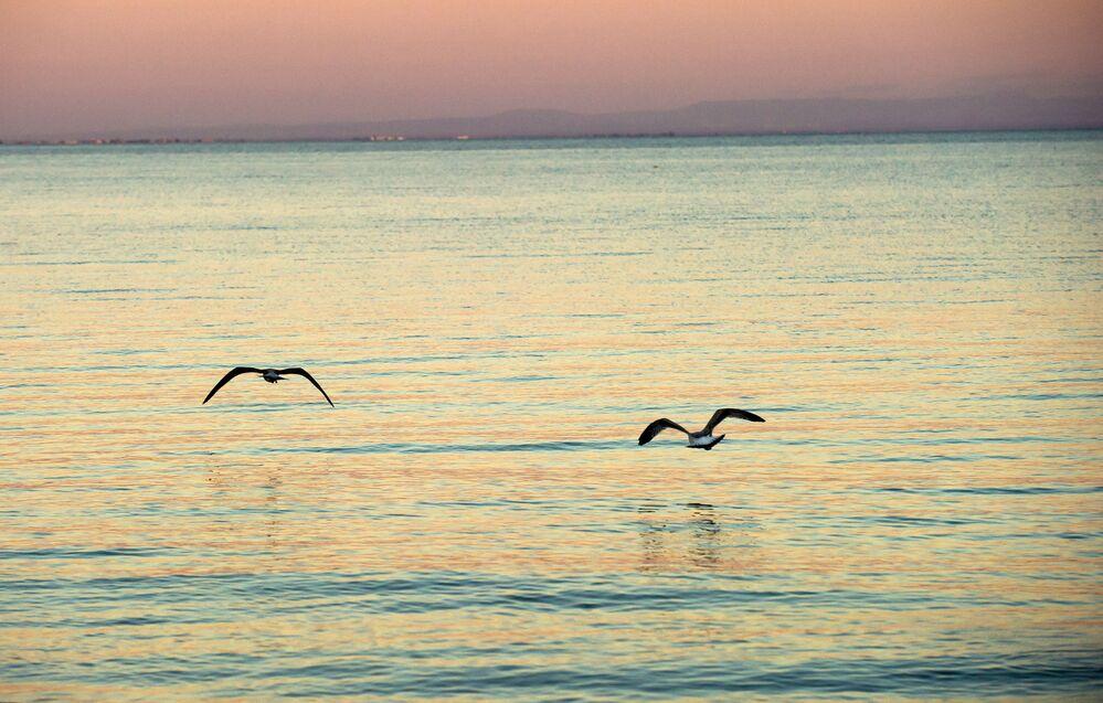 Mewy nad czarnym morzem