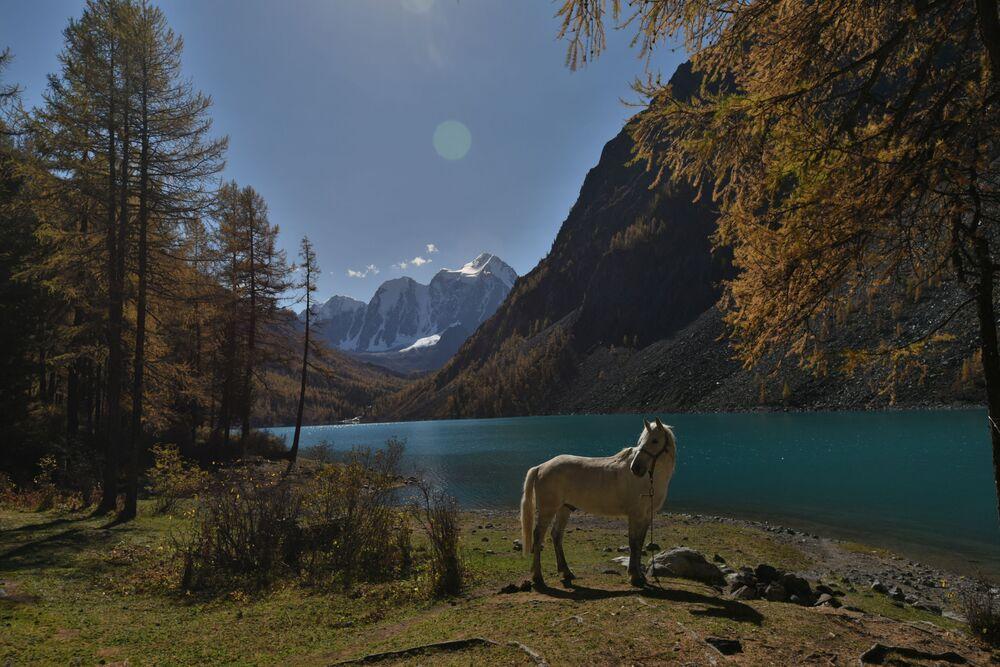 Jezioro Szawlińskie w rejonie kosz-agackim w Republice Ałtaj