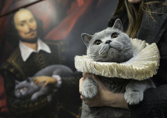 Brytyjski kot został pierwszym pasażerem na trasie szekspirowskiego pociągu