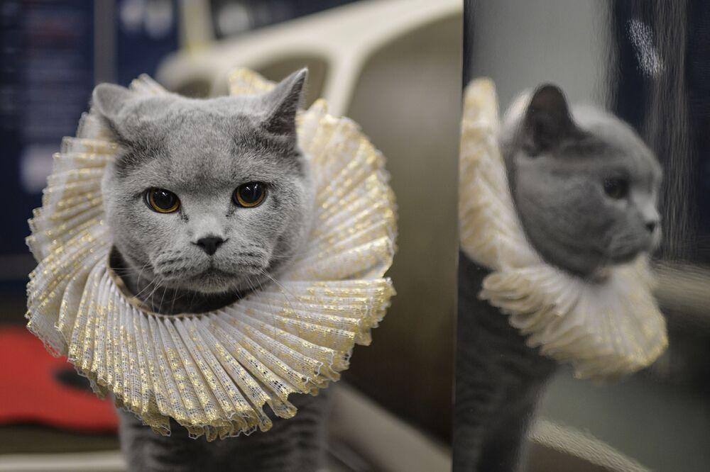 Kot zajął miejsce na siedzeniu pasażerskim i pokierował skład pasażerski w dobrą drogę.