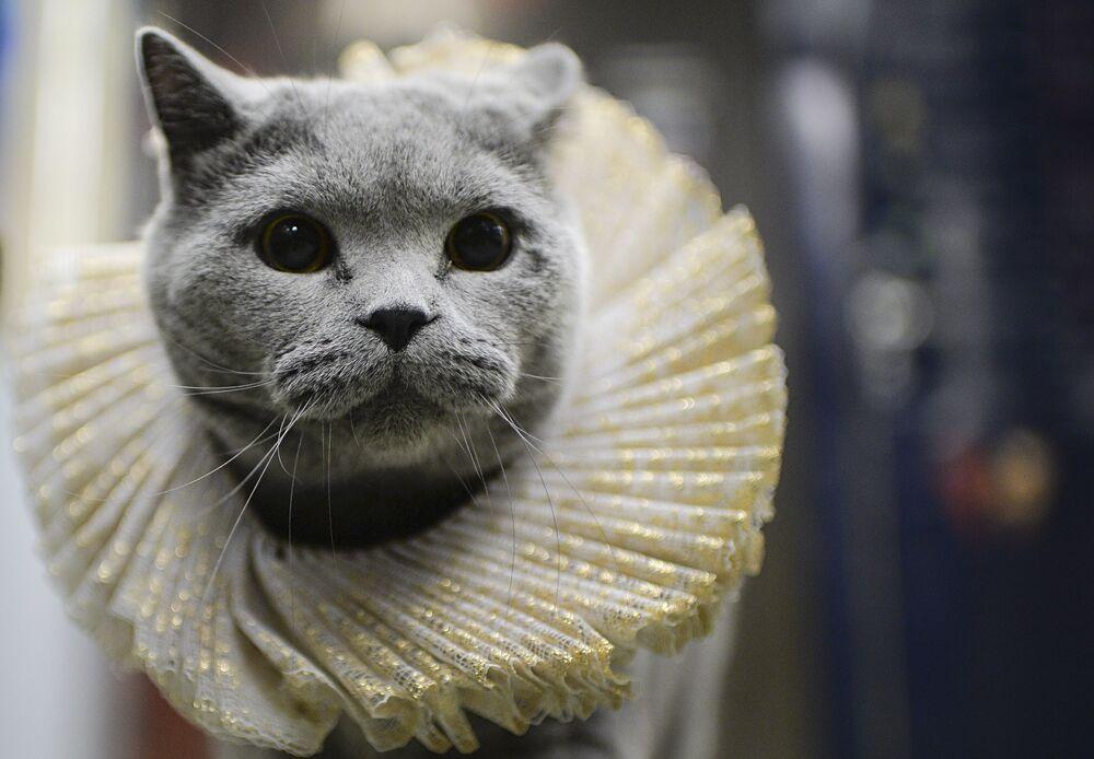Domowy kot dobrze czuł się w wagonie metra.