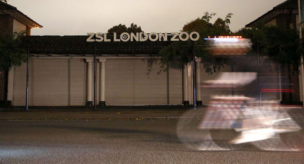 Wejście do londyńskiego ZOO