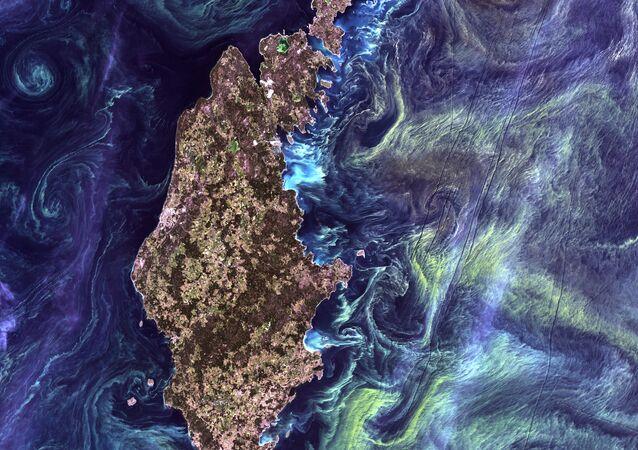 Masowe nagromadzenie fitoplanktonu w ciemnej wodzie wokół wyspy Gotlandia na Morzu Bałtyckim
