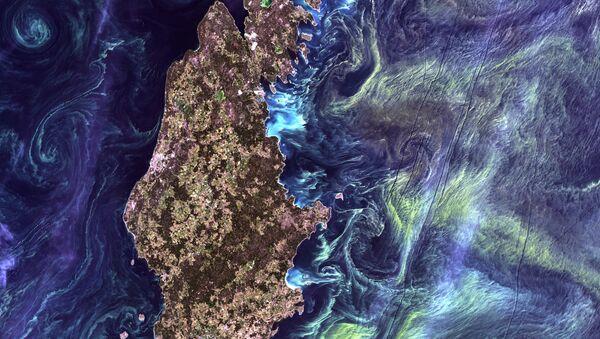 Masowe nagromadzenie fitoplanktonu w ciemnej wodzie wokół wyspy Gotlandia na Morzu Bałtyckim - Sputnik Polska