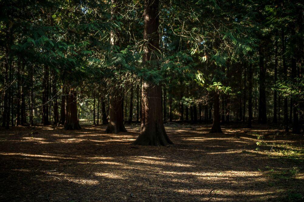 Stary Królewski bór z rosnącymi w nim wiekowymi drzewami nigdy nie był wycinany i nigdy też nie zagrażały mu piaskowe wydmy. Począwszy od XVII wieku, Leśnictwo Grenz było miejscem królewskich polowań.
