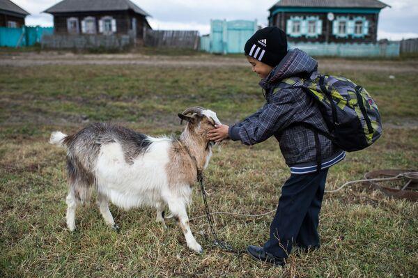 Ajdar bawi się z kozą po zajęciach w szkole - Sputnik Polska