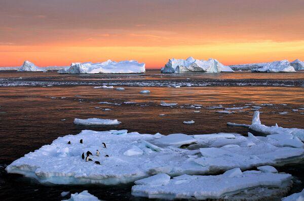 Teleradiokompania BBC odnotowuje, że Morze Rossa, które zajmuje tylko 2 % Oceanu Południowego jest miejscem zamieszkania 38% światowej populacji pingwina Adeli, 30 % burzyków i około 6 % waleni z rodzaju płetwali karłowatych. - Sputnik Polska