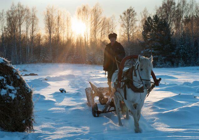 Powóz we wsi Bieriozowka w obwodzie tomskim