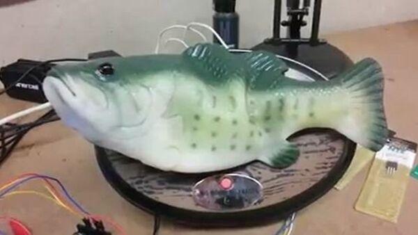 Wideo: Amerykanin zmusił rybę do mówienia - Sputnik Polska