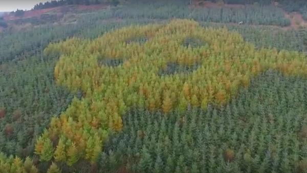 Co wyrosło w irlandzkim lesie? - Sputnik Polska