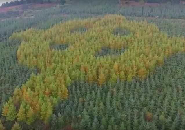 Co wyrosło w irlandzkim lesie?