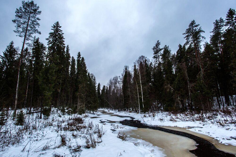 Rzeka Łososinka w rejonie prioneżskim Republiki Karelii