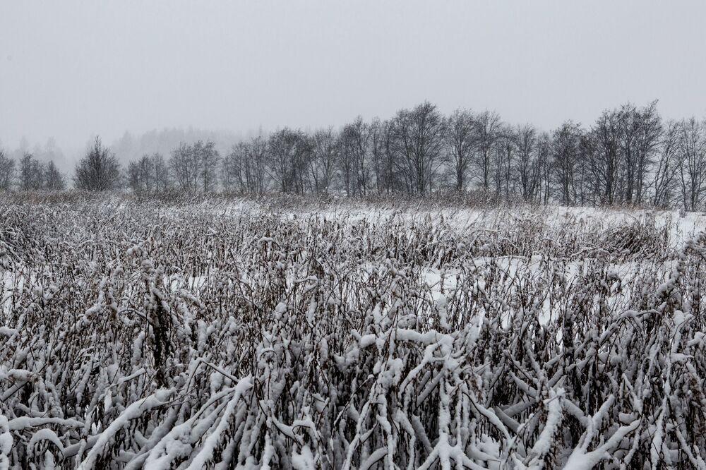 Zaśnieżona łąka w Karelii