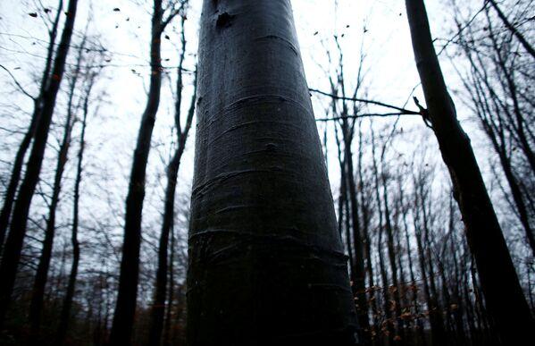 Drzewa w bieszczadzkim lesie w Polsce - Sputnik Polska