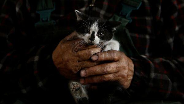Węglarz trzyma kotka na rękach - Sputnik Polska
