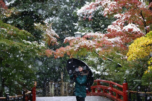 Pierwszy śnieg w parku przy świątyni Tsurugaoka Hachimangu w Japonii - Sputnik Polska