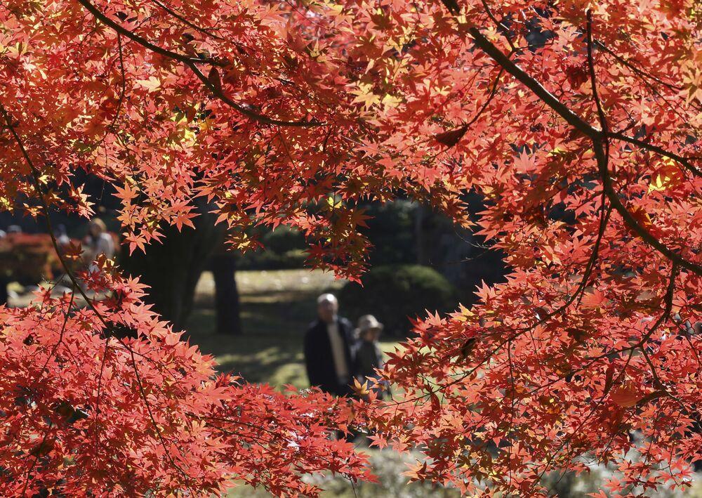Kolory jesieni w ogrodzie Koishikawa Korakuen w Tokio