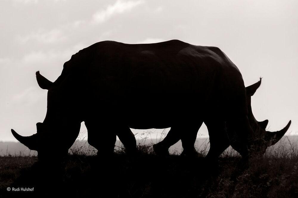 Niejasność. Autor:  Rudi Hulshof , Republika Południowej Afryki.