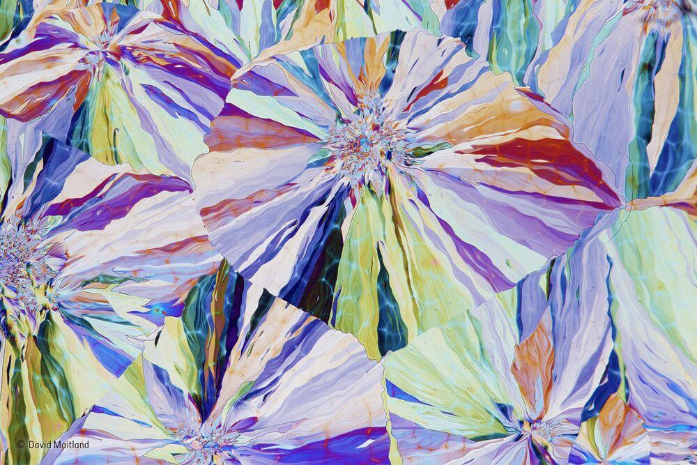 Kryształy salicyny, wydzielane przez korę wierzby. Autor:  David Maitland , Wielka Brytania.
