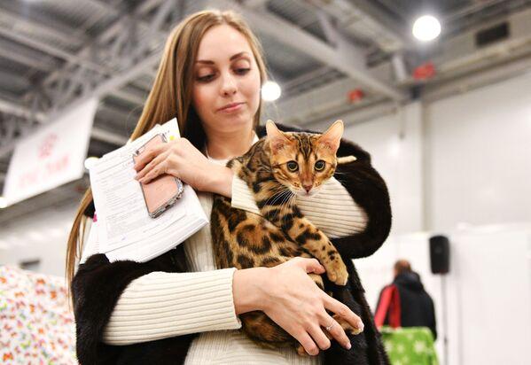 Charakter kotów bengalskich łączy temperament domowego zwierzęcia i instynkt łowiecki dzikiego kota. - Sputnik Polska