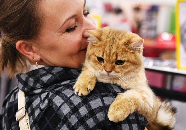 Na wystawie były zaprezentowane koty ponad 50 ras, w tym również rzadkie i egzotyczne rasy. - Sputnik Polska