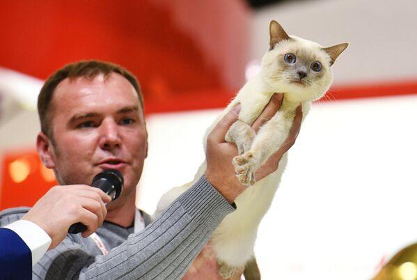Eksperci wyjaśniają popularność moskiewskiej wystawy tym, że liczba kotów w rosyjskich domach znacznie przewyższa liczbę psów. - Sputnik Polska