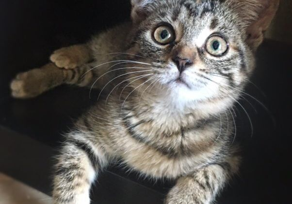 Nie tylko rasowe koty cechują się pięknym wyglądem i przyjaznym usposobieniem: w wielu domach najmilszymi towarzyszami są zwykłe dachowce. Zobacz wiecej: http://iskracats.org/products/category/44662 , a także: http://rayfund.ru/animals/