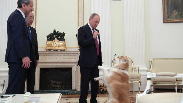 """Prezydent Rosji Władimir Putin z psem Yume przed wywiadem na Kremlu dla stacji telewizyjnej """"Nippon"""" i gazety Yomiuri w przeddzień oficjalnej wizyty w Japonii - Sputnik Polska"""