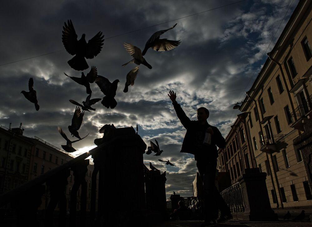 Mężczyzna karmi gołębie na kanale Gribojedowa w Petersburgu