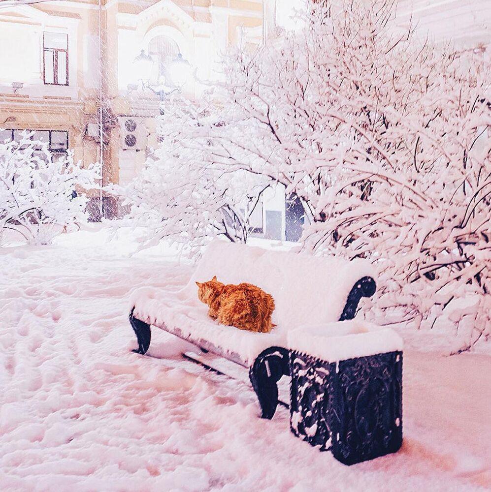 Kotka fotografa na zaśnieżonej ławeczce