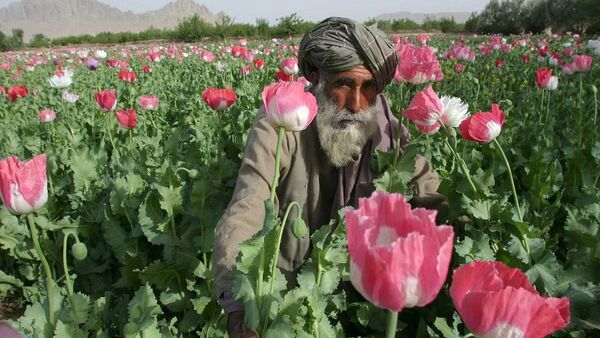 Opium, Afganistan - Sputnik Polska