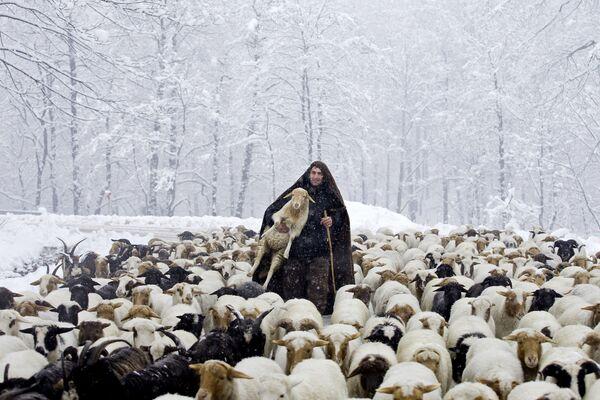 Irański pasterz z jagniętami podczas opadów śniegu w Górach Tałyskich - Sputnik Polska