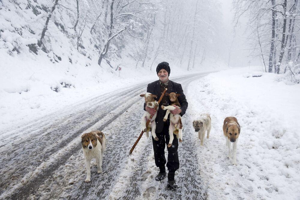 Irański pasterz z jagniętami i psami w Górach Tałyskich