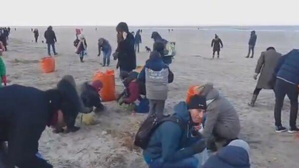Cała plaża pokryta Kinder Niespodziankami - Sputnik Polska