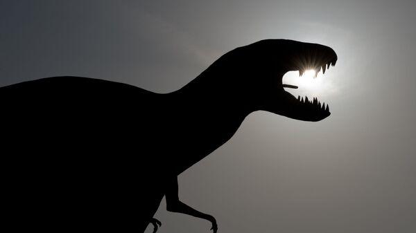 Do niedawna nauka znała tylko kilka pojedynczych przypadków  skamieniałych jaj dinozaurów i fragmentów ich skorup - Sputnik Polska